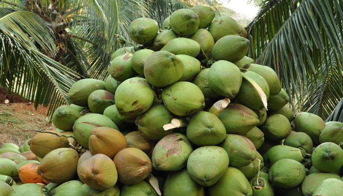 কচি ডাবের কেরামতি