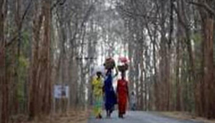 নিম্ন মানের দু'টাকার কিলোর চাল এখন গরুর খাদ্য, দামি চাল কিনতে বাধ্য হচ্ছেন জঙ্গলমহলের মানুষ