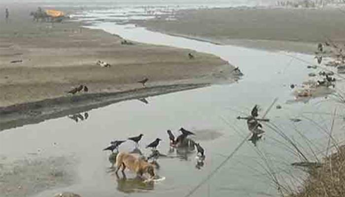 উত্তরপ্রদেশের গঙ্গায় ভাসছে ১০০ টি দেহ, তদন্তের নির্দেশ