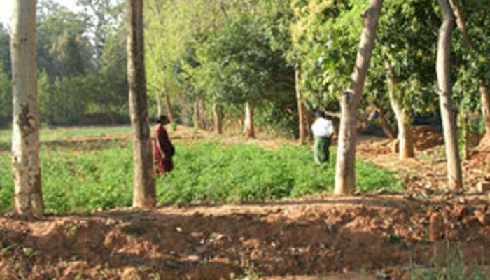 মুখ্যমন্ত্রীর ঘোষণাই সার, গমের বদলে আটা পাচ্ছে না জঙ্গলমহলের তিন জেলা