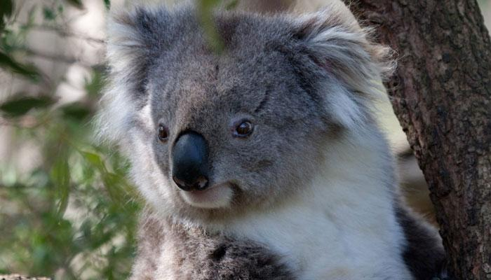 Koala uni paderborn