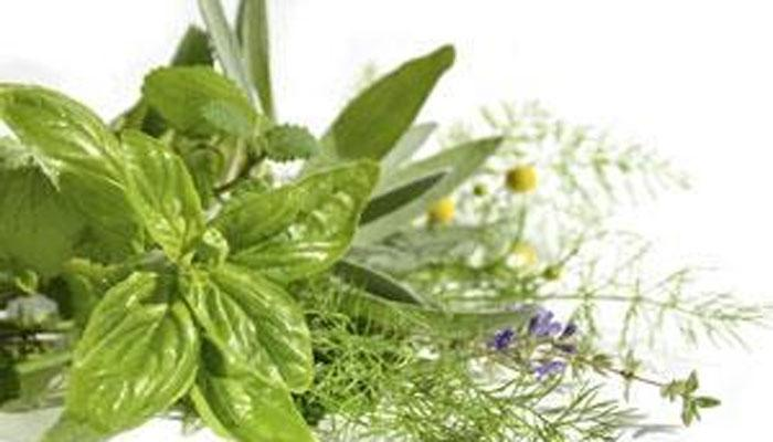 herbal plants research paper Herbal medicine aims to explore medical plants and their ingredients with respect to their therapeutic effects effectivepaperscom is professional writing service which is committed to write top-quality custom research papers, proposals, term papers, essays, thesis papers and dissertations.