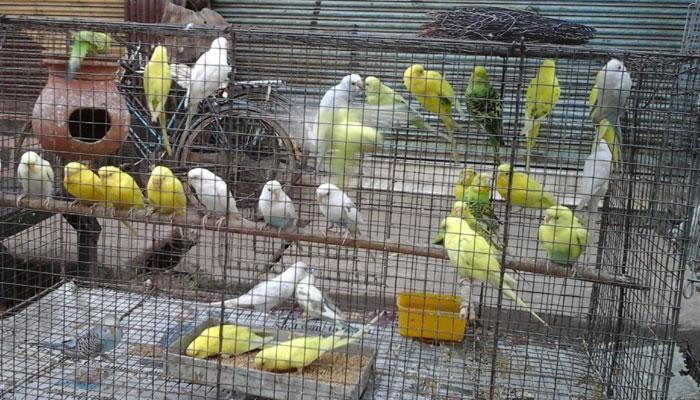 কলেজ স্কোয়ারে পাখির মেলা ও মাছের প্রদর্শনী