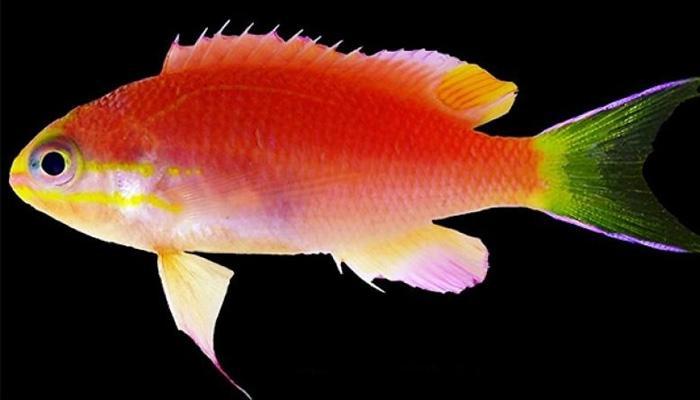এই মাছটির সঙ্গে মার্কিন প্রেসিডেন্ট ওবামার 'গভীর' সম্পর্ক!