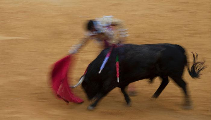 ভাইফোঁটায় 'বুল ফাইট' উৎসবই বাঁকুড়ার ঐতিহ্য