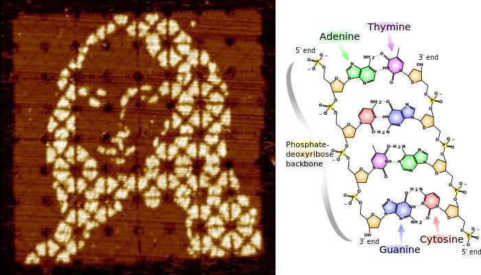 DNA ভাঁজ করে বিশ্বের ক্ষুদ্রতম মোনালিসা আঁকলেন গবেষকরা