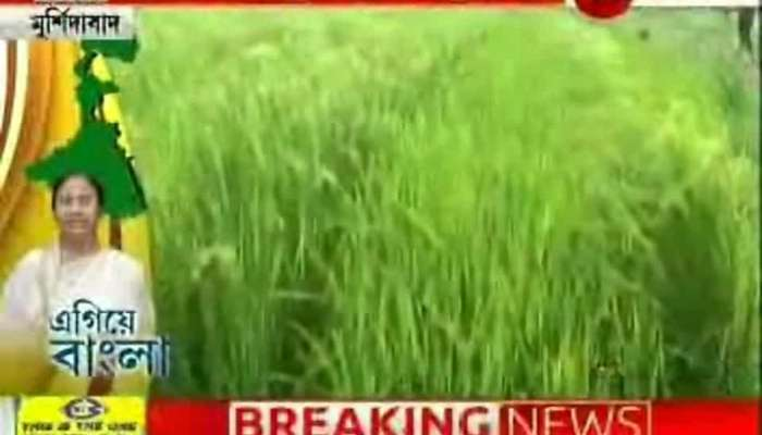 Egiye Bangla: Sowing paddy seeds by machine