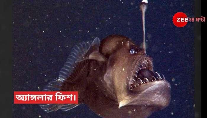 অতল সমুদ্রে আজব মাছ